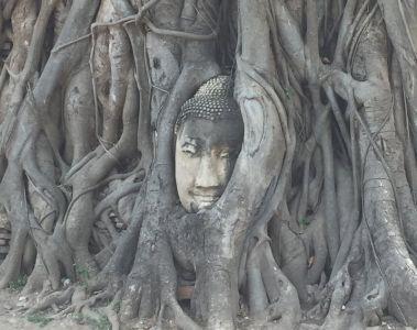 jedina sacuvana budina glava u Ayutthayi 2